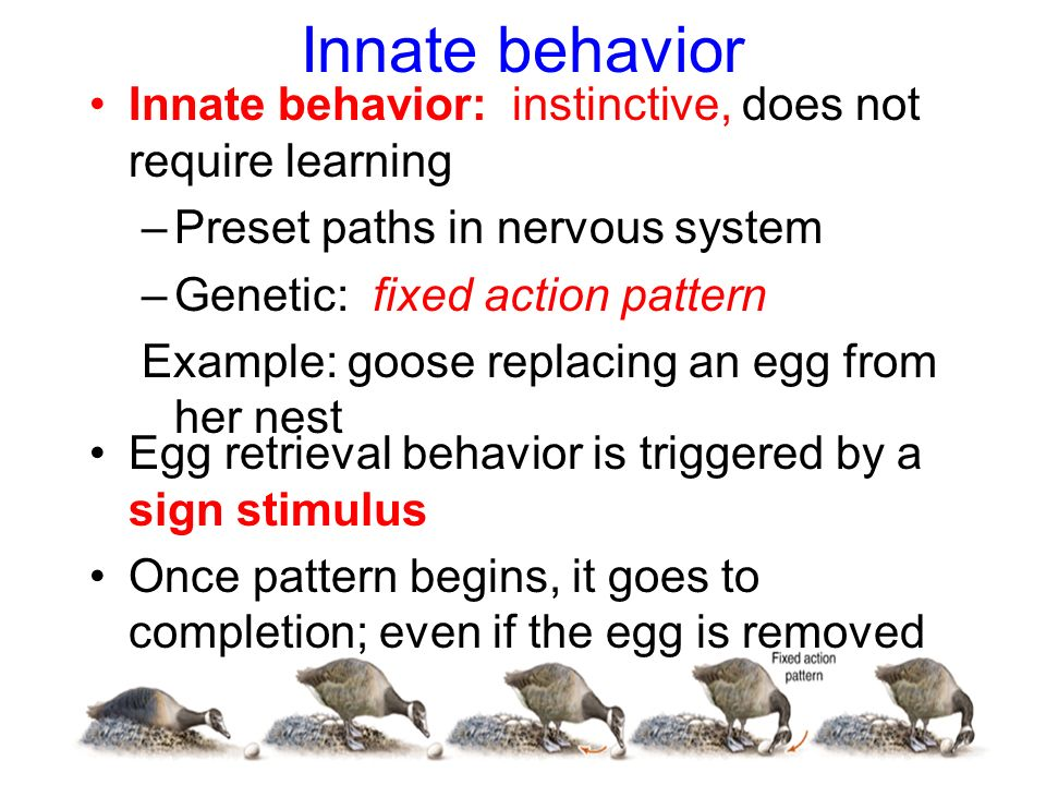 Instinctive Behavior Examples 71593 Tweb