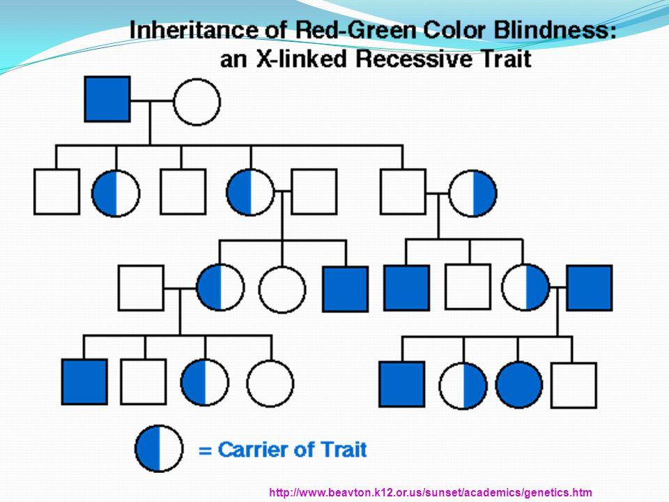 http://www.beavton.k12.or.us/sunset/academics/genetics.htm