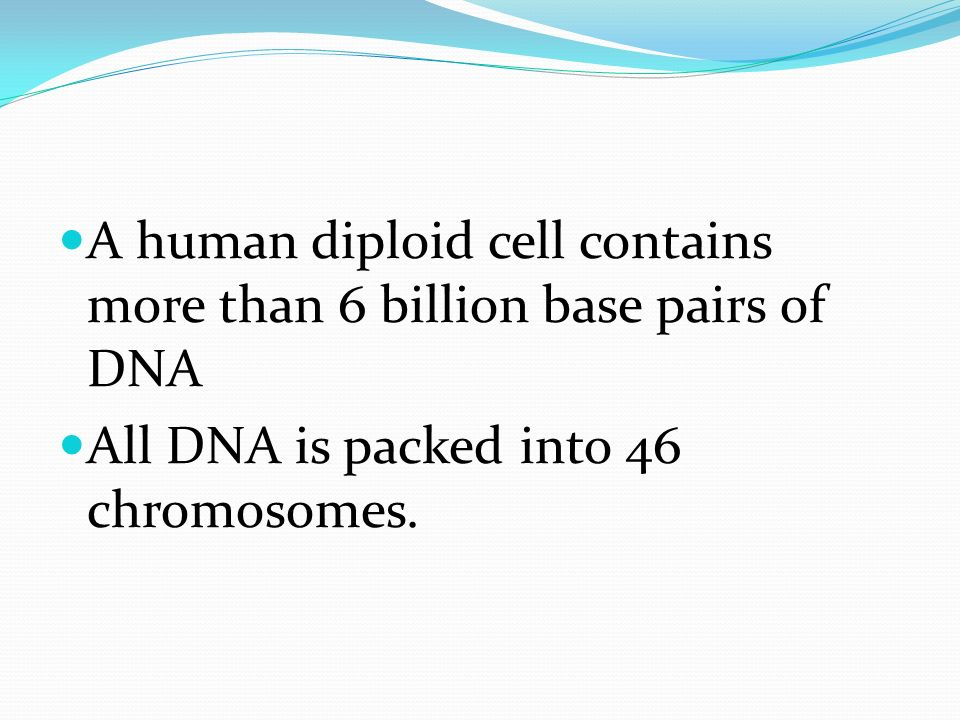 A human diploid cell contains more than 6 billion base pairs of DNA