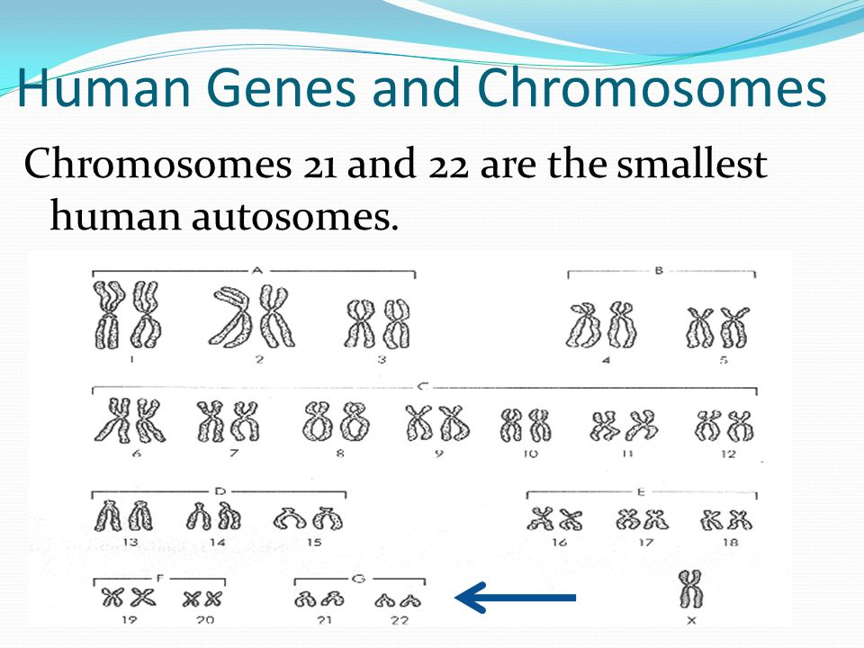 Human Genes and Chromosomes