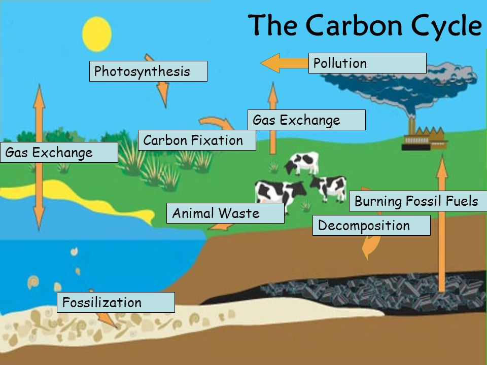 The Carbon Cycle Pollution Photosynthesis Gas Exchange Carbon Fixation