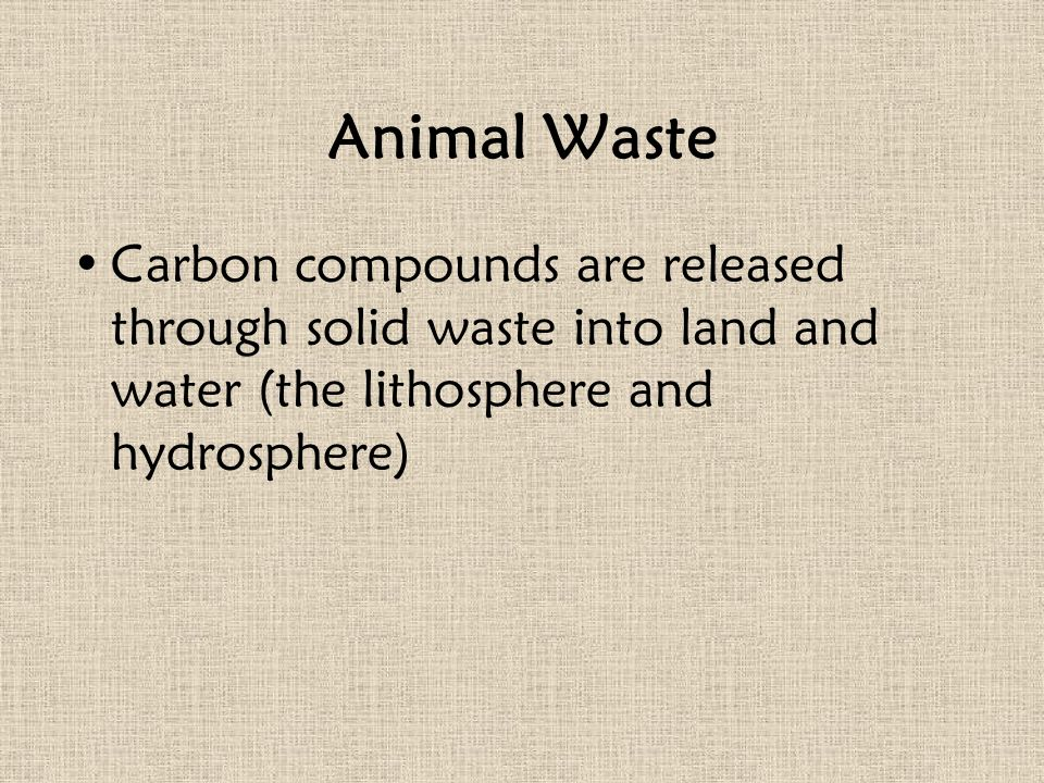 Animal Waste Carbon compounds are released through solid waste into land and water (the lithosphere and hydrosphere)