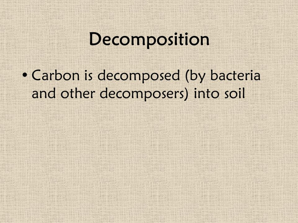 Decomposition Carbon is decomposed (by bacteria and other decomposers) into soil