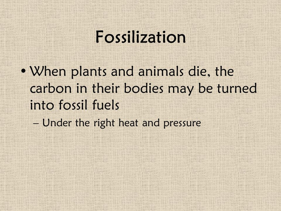 Fossilization When plants and animals die, the carbon in their bodies may be turned into fossil fuels.