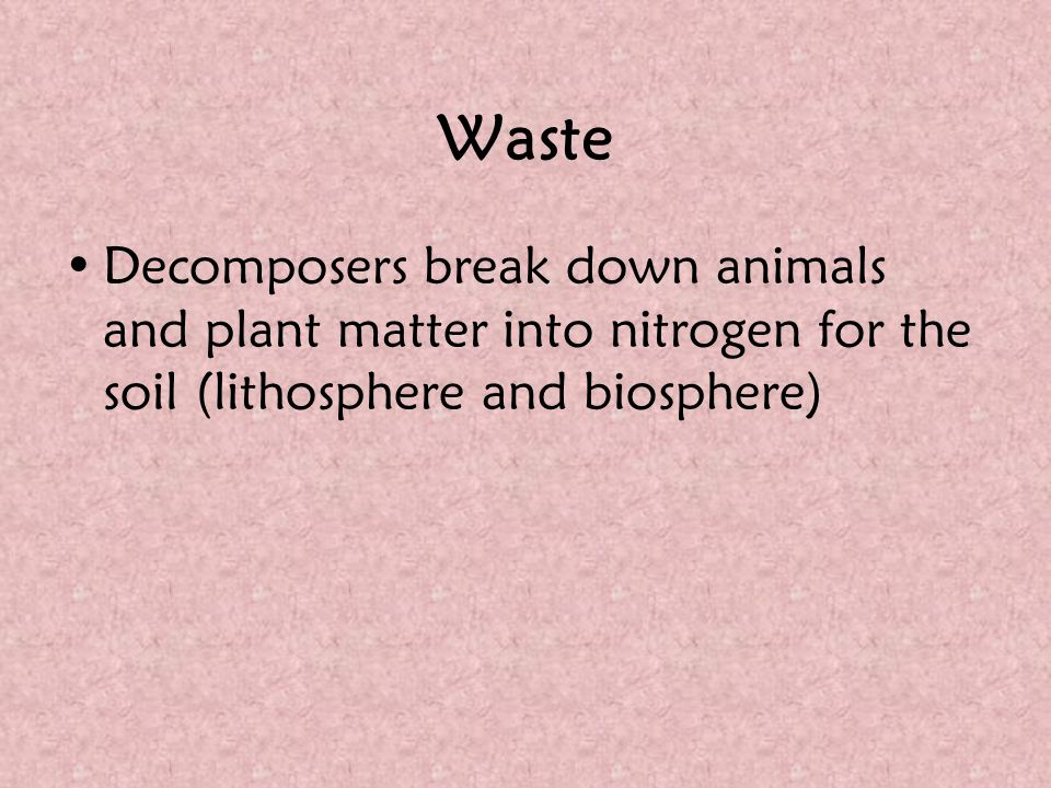 Waste Decomposers break down animals and plant matter into nitrogen for the soil (lithosphere and biosphere)