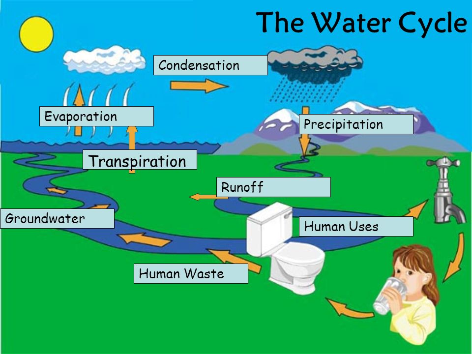 The Water Cycle Transpiration Condensation Evaporation Precipitation