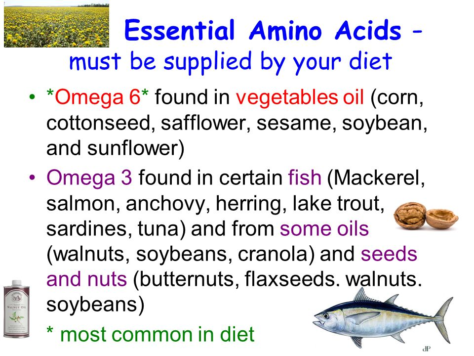 Essential Amino Acids - must be supplied by your diet