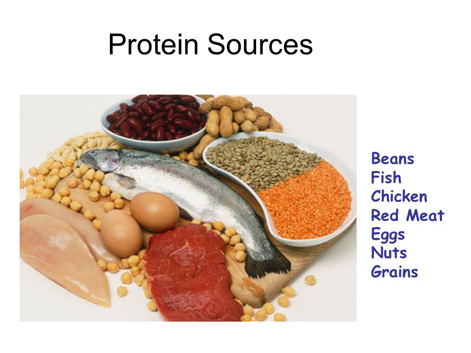 Protein Sources Beans Fish Chicken Red Meat Eggs Nuts Grains