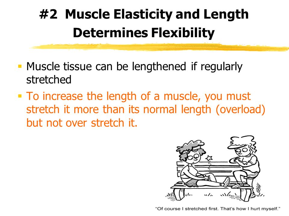 #2 Muscle Elasticity and Length Determines Flexibility
