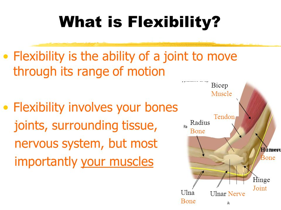What is Flexibility Flexibility is the ability of a joint to move through its range of motion. Flexibility involves your bones,