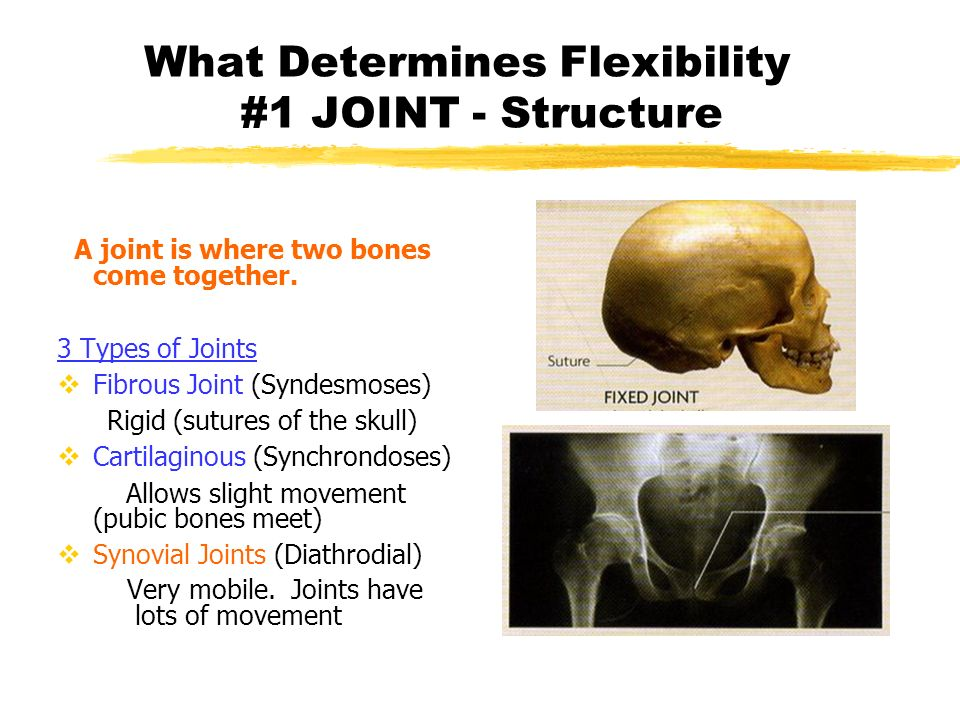What Determines Flexibility #1 JOINT - Structure