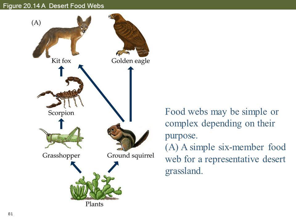 Simple Desert Food Web Diagram Wiring Library