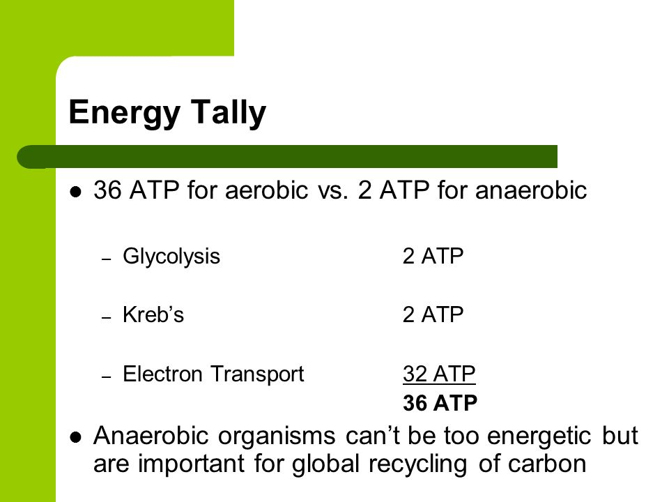 Energy Tally 36 ATP for aerobic vs. 2 ATP for anaerobic