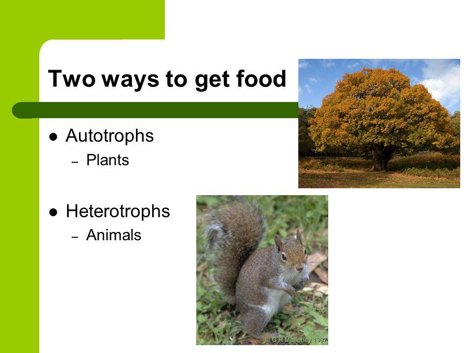 Two ways to get food Autotrophs Plants Heterotrophs Animals