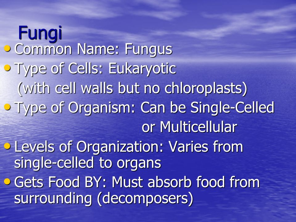 Fungi Common Name: Fungus Type of Cells: Eukaryotic