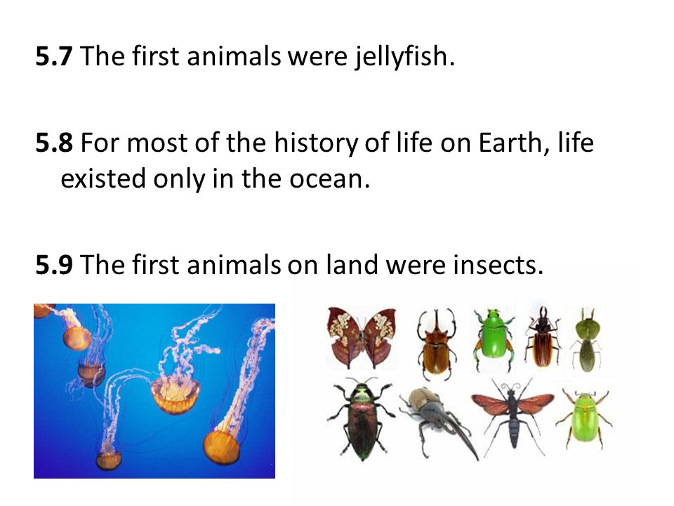 First Insects On Earth