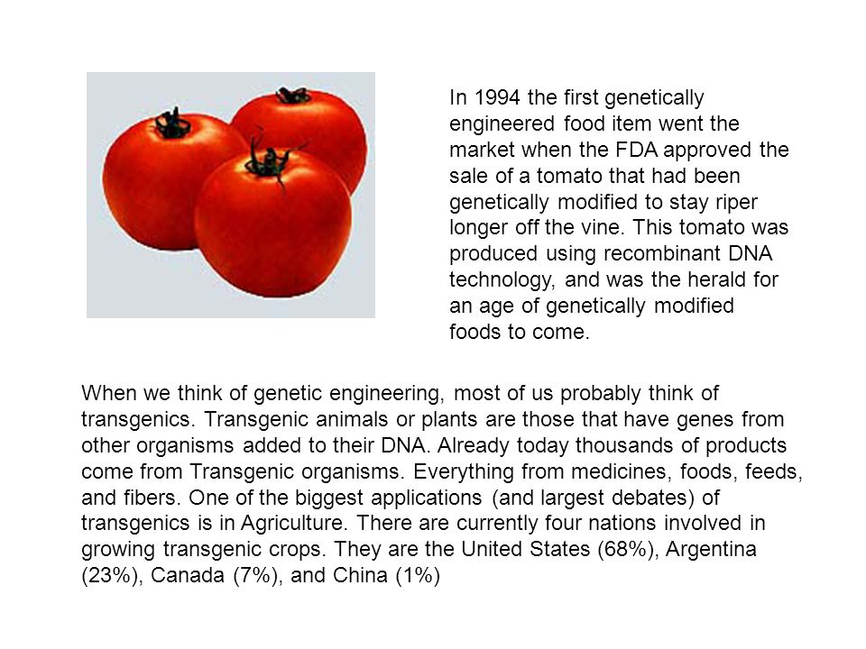 In 1994 the first genetically engineered food item went the market when the FDA approved the sale of a tomato that had been genetically modified to stay riper longer off the vine. This tomato was produced using recombinant DNA technology, and was the herald for an age of genetically modified foods to come.