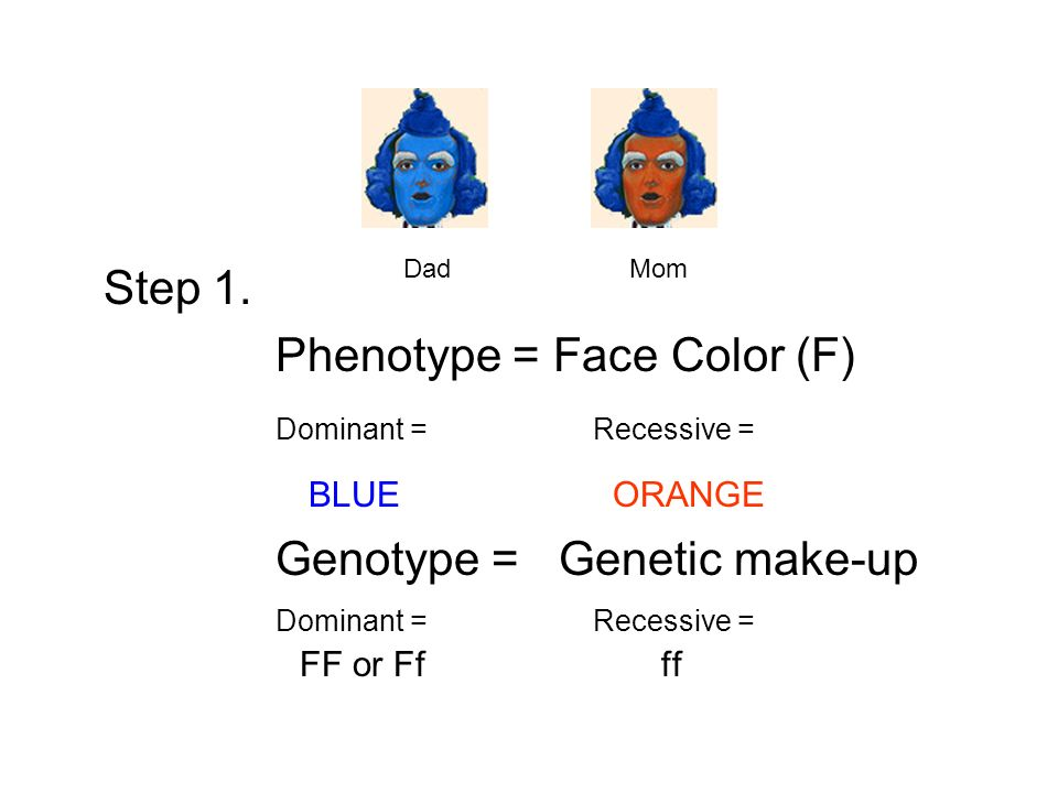 Phenotype = Face Color (F) Dominant = Recessive = BLUE ORANGE