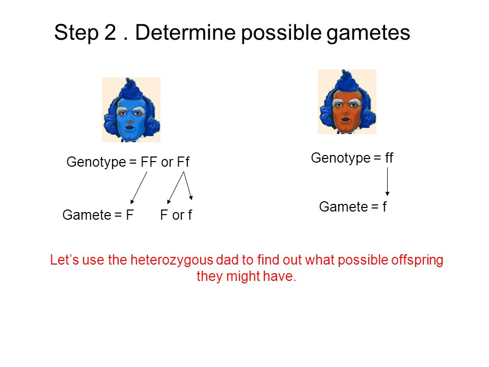 Step 2 . Determine possible gametes