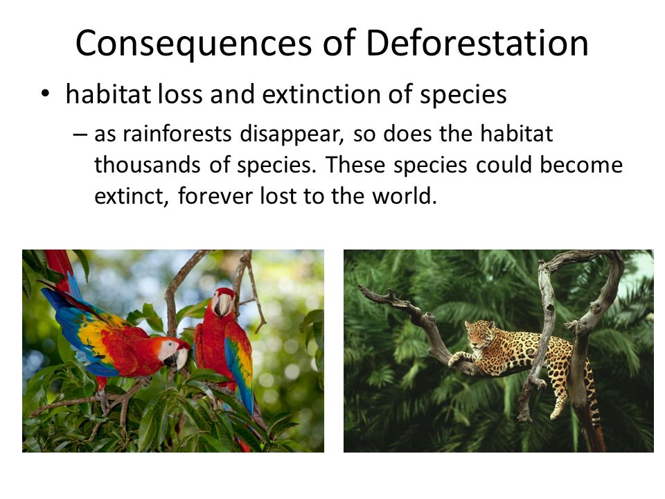 domestic consequences of deforestation Cattle ranching is the largest driver of deforestation in every amazon as brazil's industry was nascent and domestic history, rates, and consequences.