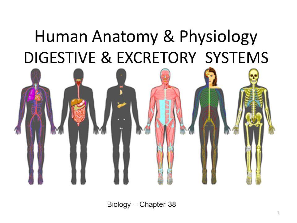 Human Anatomy & Physiology DIGESTIVE & EXCRETORY SYSTEMS