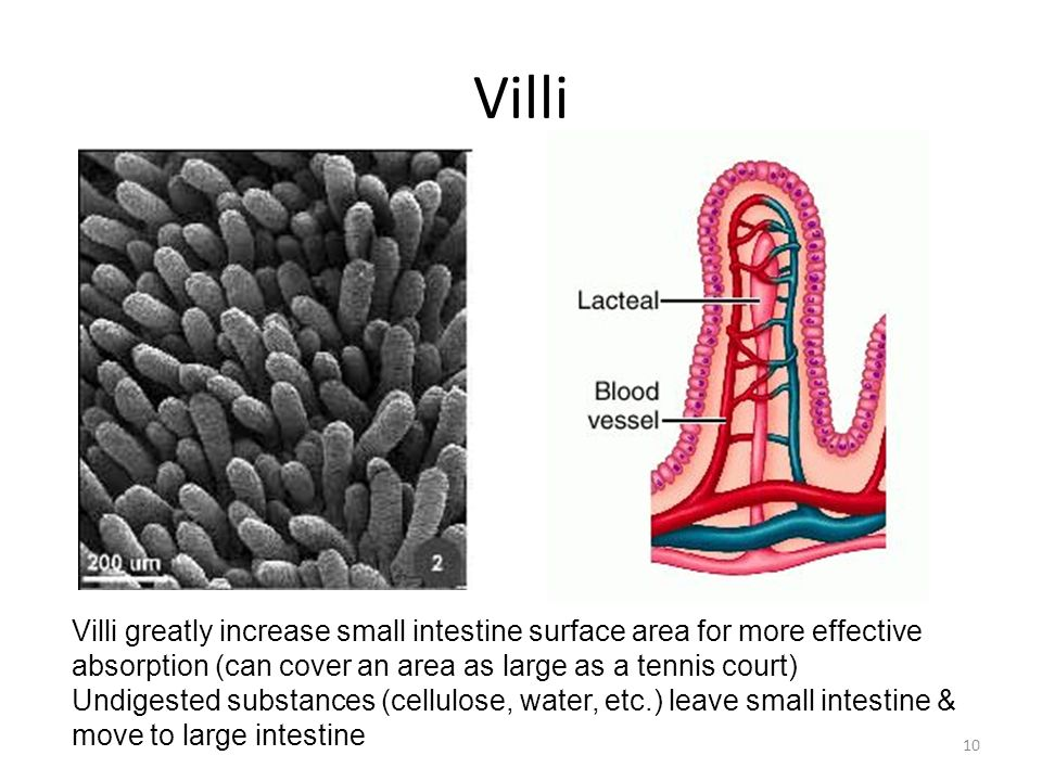 Villi Villi greatly increase small intestine surface area for more effective absorption (can cover an area as large as a tennis court)