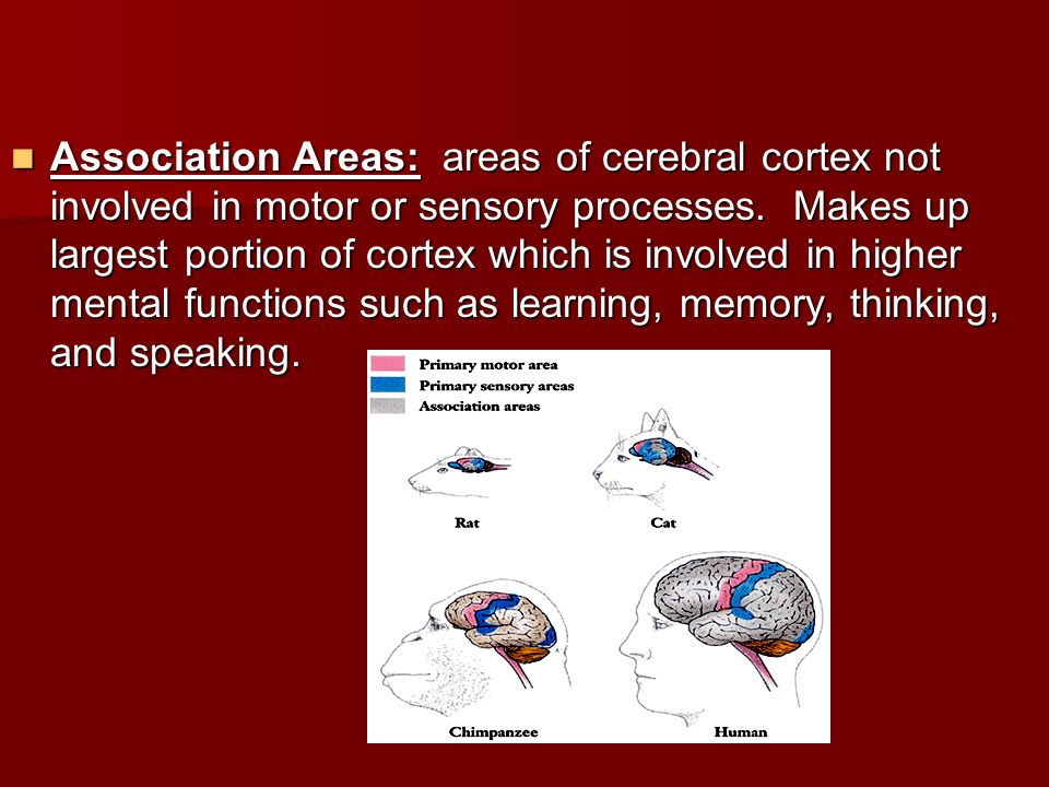 Association Areas: areas of cerebral cortex not involved in motor or sensory processes.