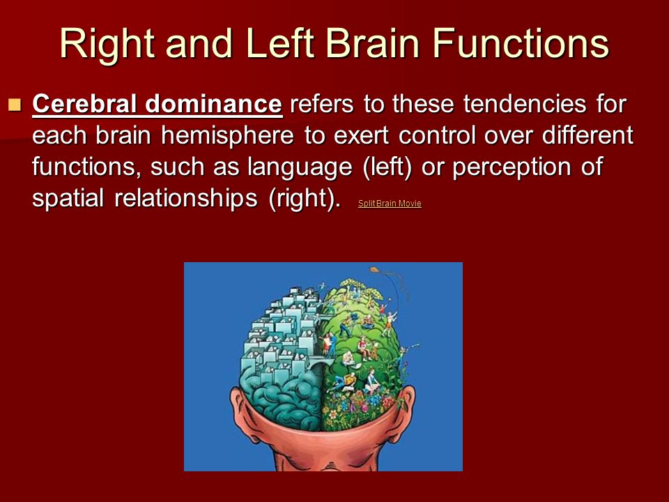 Right and Left Brain Functions