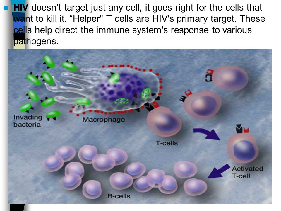 HIV doesn't target just any cell, it goes right for the cells that want to kill it.