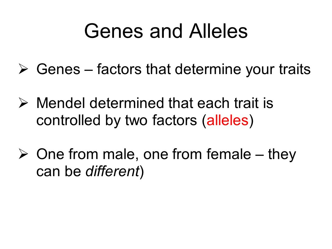 Genes and Alleles Genes – factors that determine your traits