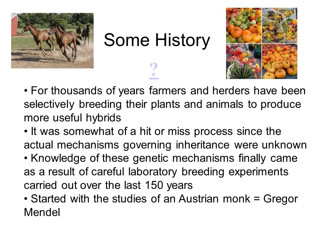 Some History For thousands of years farmers and herders have been selectively breeding their plants and animals to produce more useful hybrids.