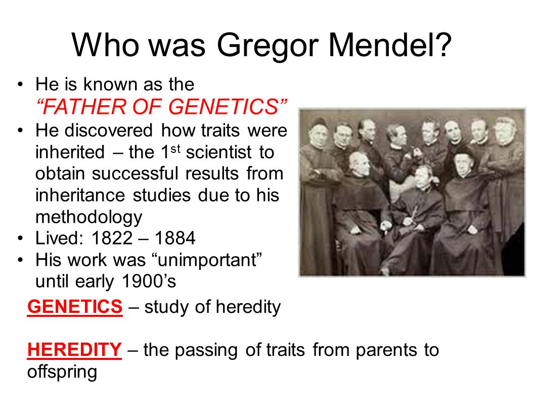 Who was Gregor Mendel He is known as the FATHER OF GENETICS