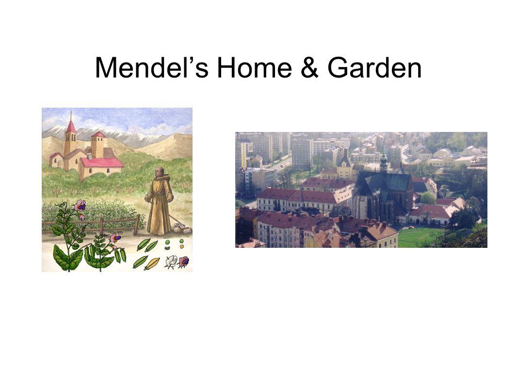 Mendel's Home & Garden