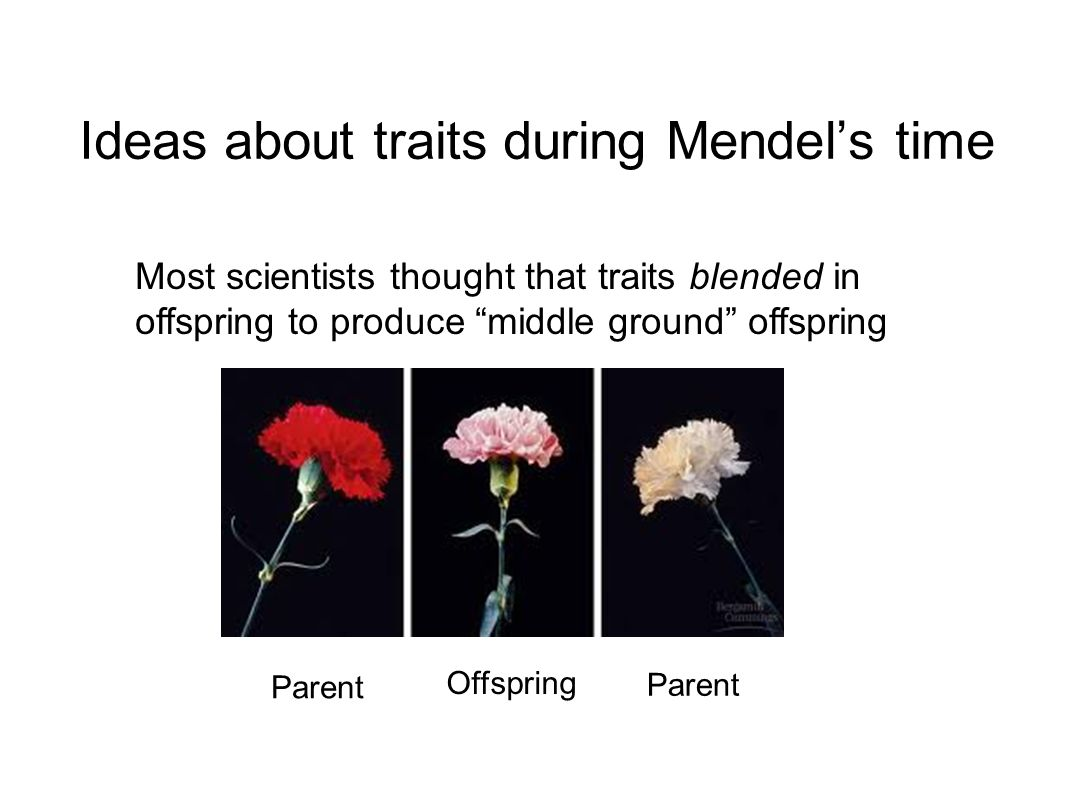Ideas about traits during Mendel's time