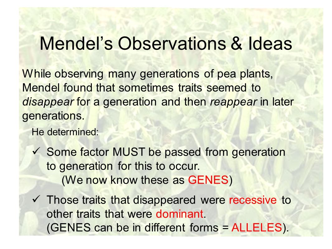 Mendel's Observations & Ideas