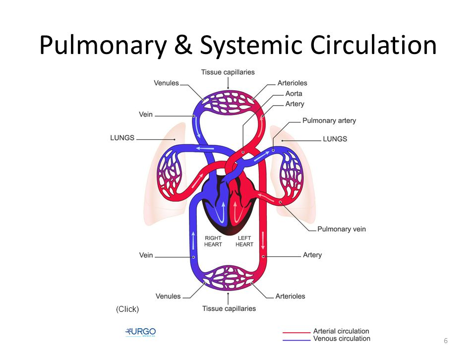 Pulmonary & Systemic Circulation