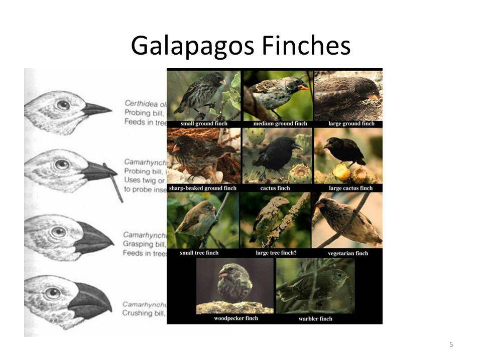 Galapagos Finches Each island had different climates and vegetation.