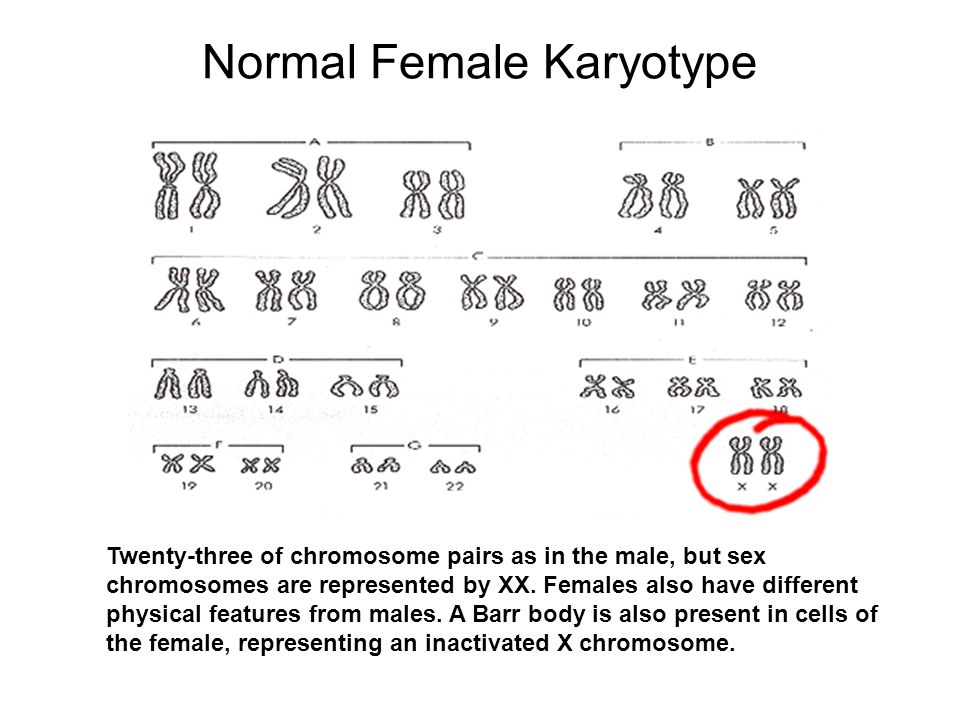 Male sex chromosomes are represented by photo 416