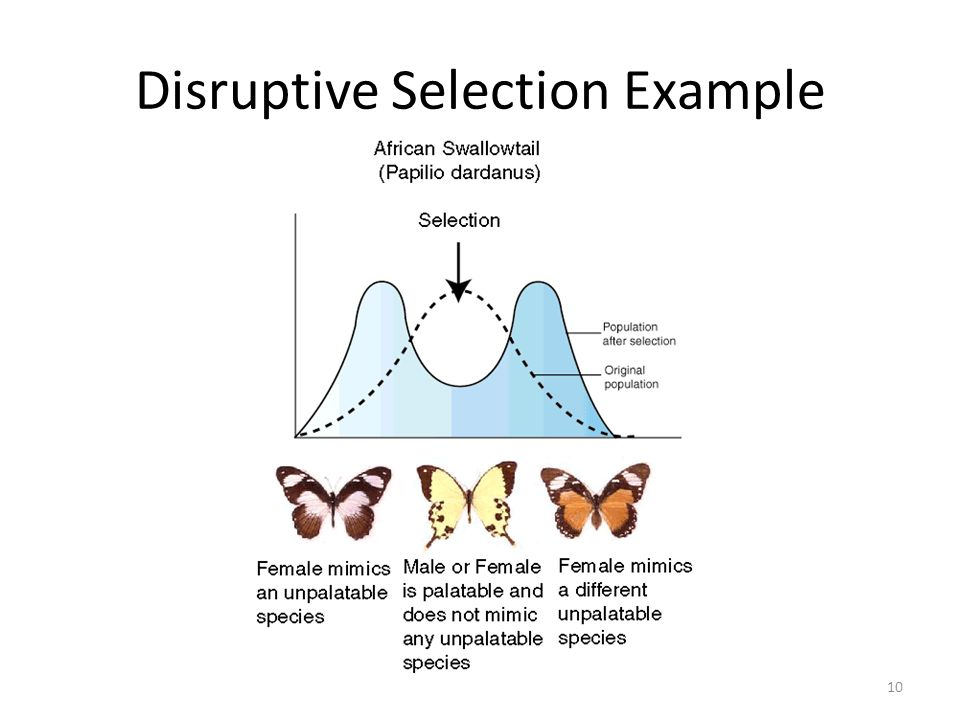 Disruptive Selection Example
