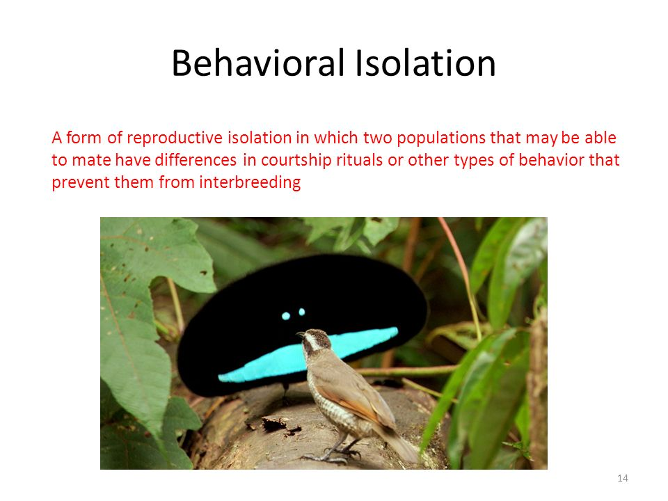 Behavioral Isolation