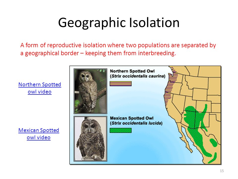 Geographic Isolation A form of reproductive isolation where two populations are separated by a geographical border – keeping them from interbreeding.