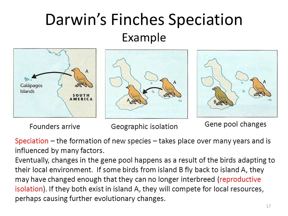 Darwin's Finches Speciation Example