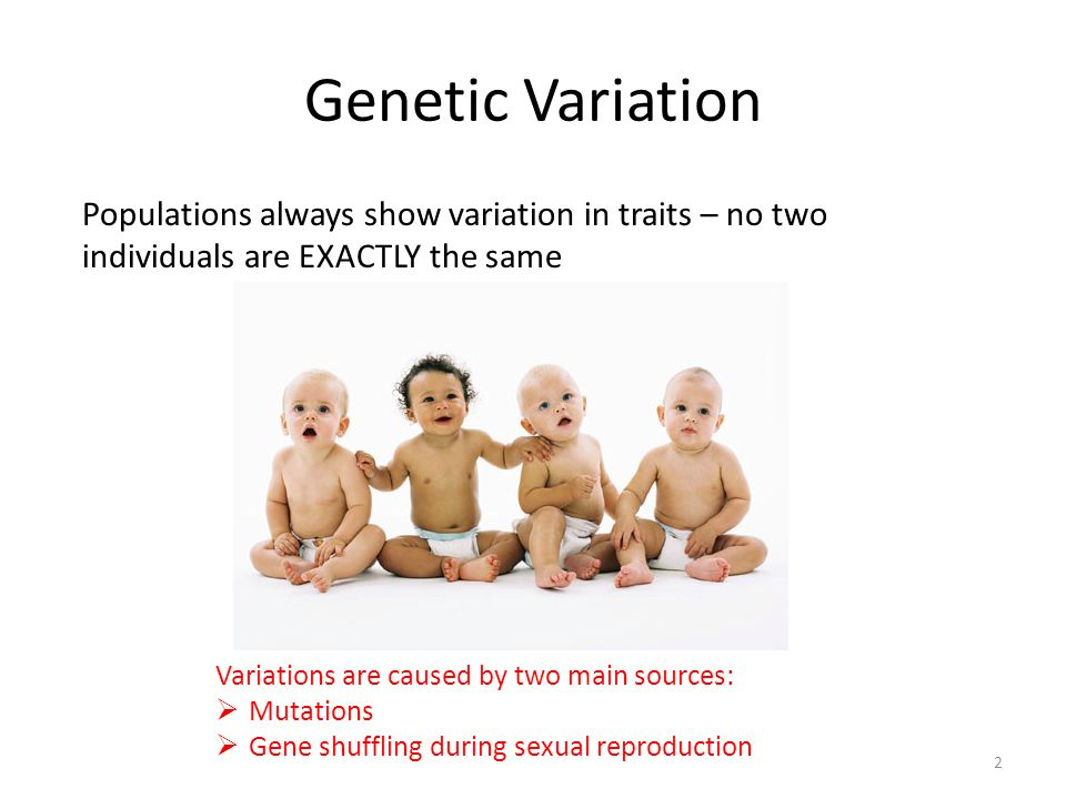 Genetic Variation Populations always show variation in traits – no two individuals are EXACTLY the same.
