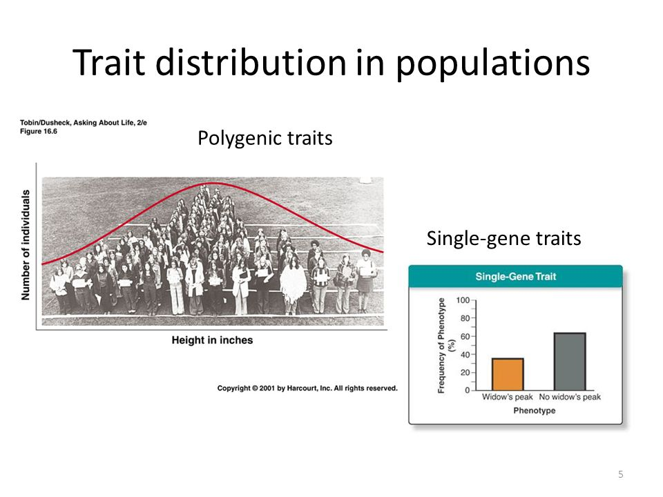 Trait distribution in populations
