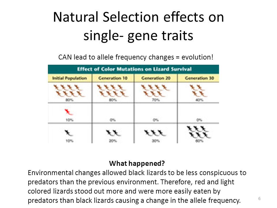 Natural Selection effects on single- gene traits