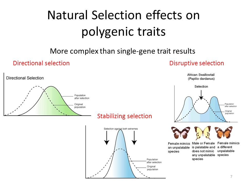 Natural Selection effects on polygenic traits