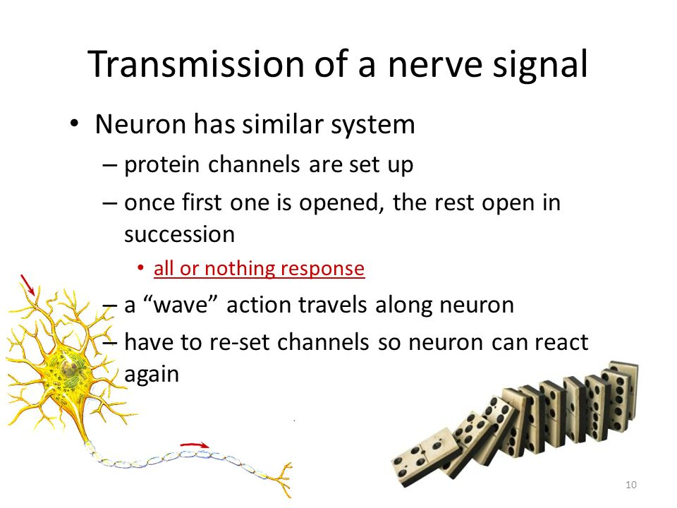 Transmission of a nerve signal