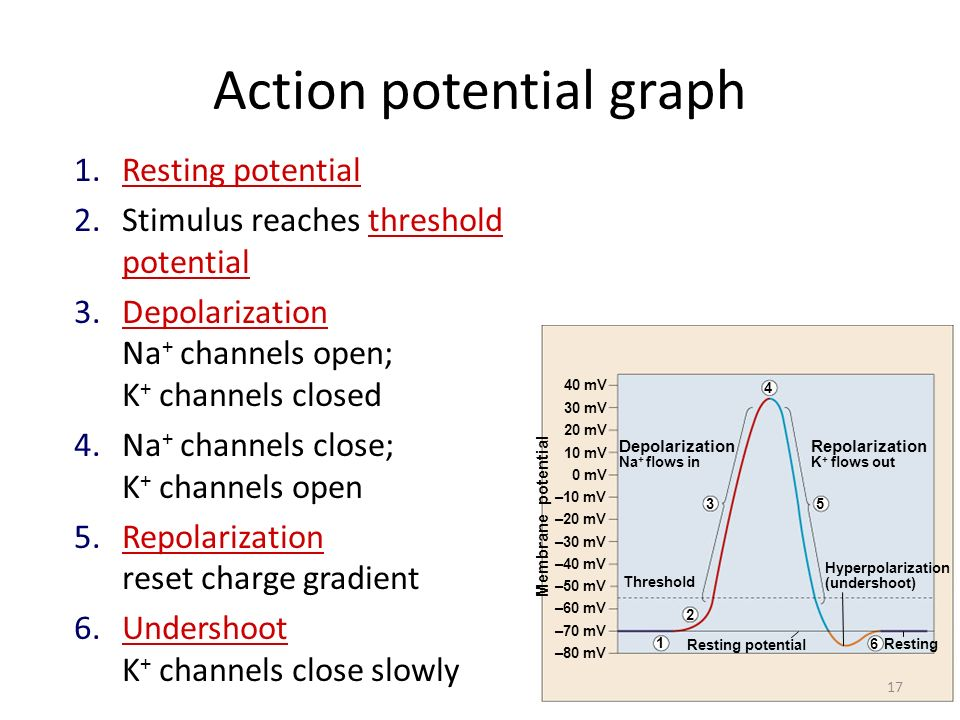 Action potential graph