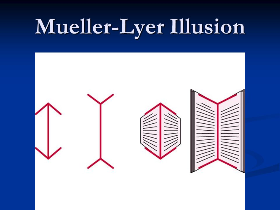 Mueller-Lyer Illusion