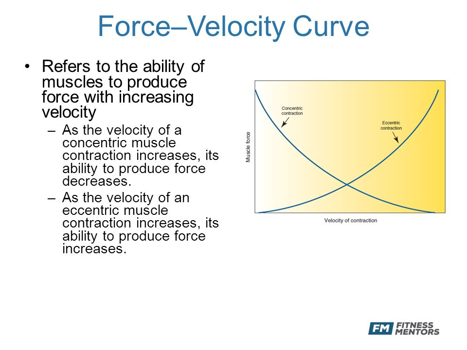 force velocity relationship muscle explained photos